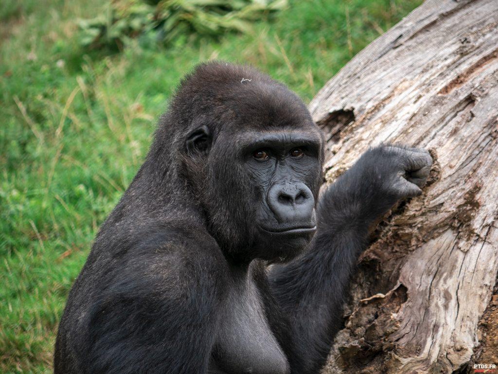 Louer un objectif photo pour aller au ZooParc de Beauval 6