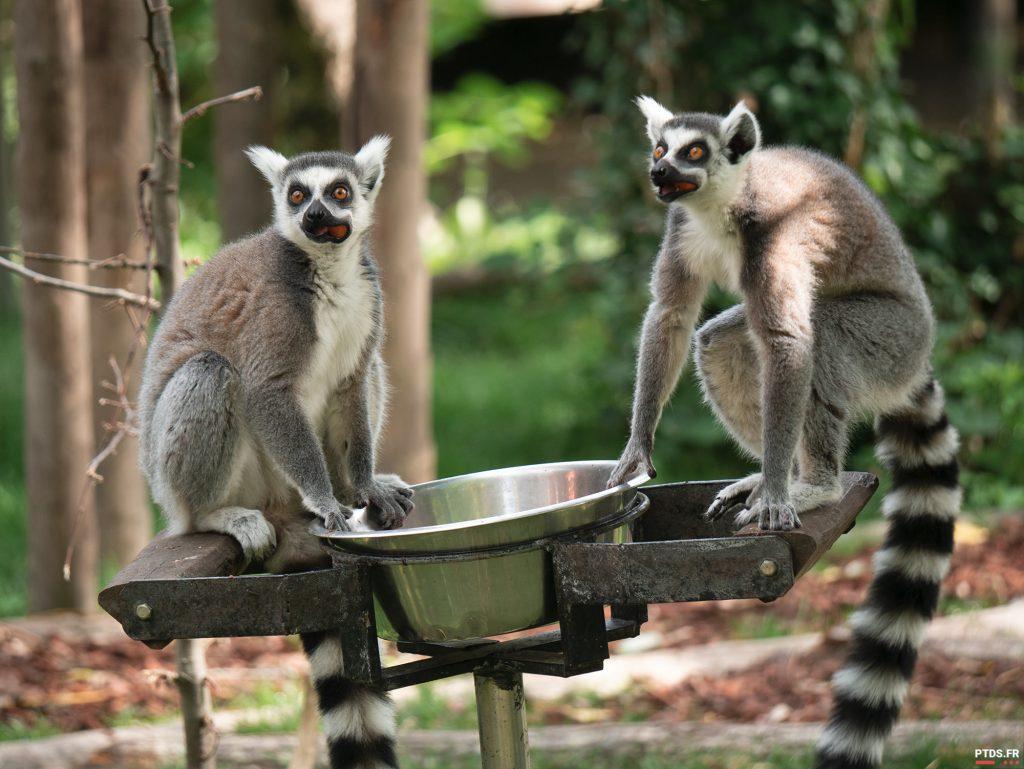 Louer un objectif photo pour aller au ZooParc de Beauval 10