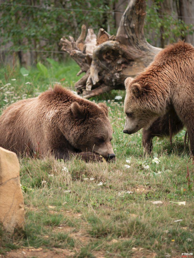 Louer un objectif photo pour aller au ZooParc de Beauval 9