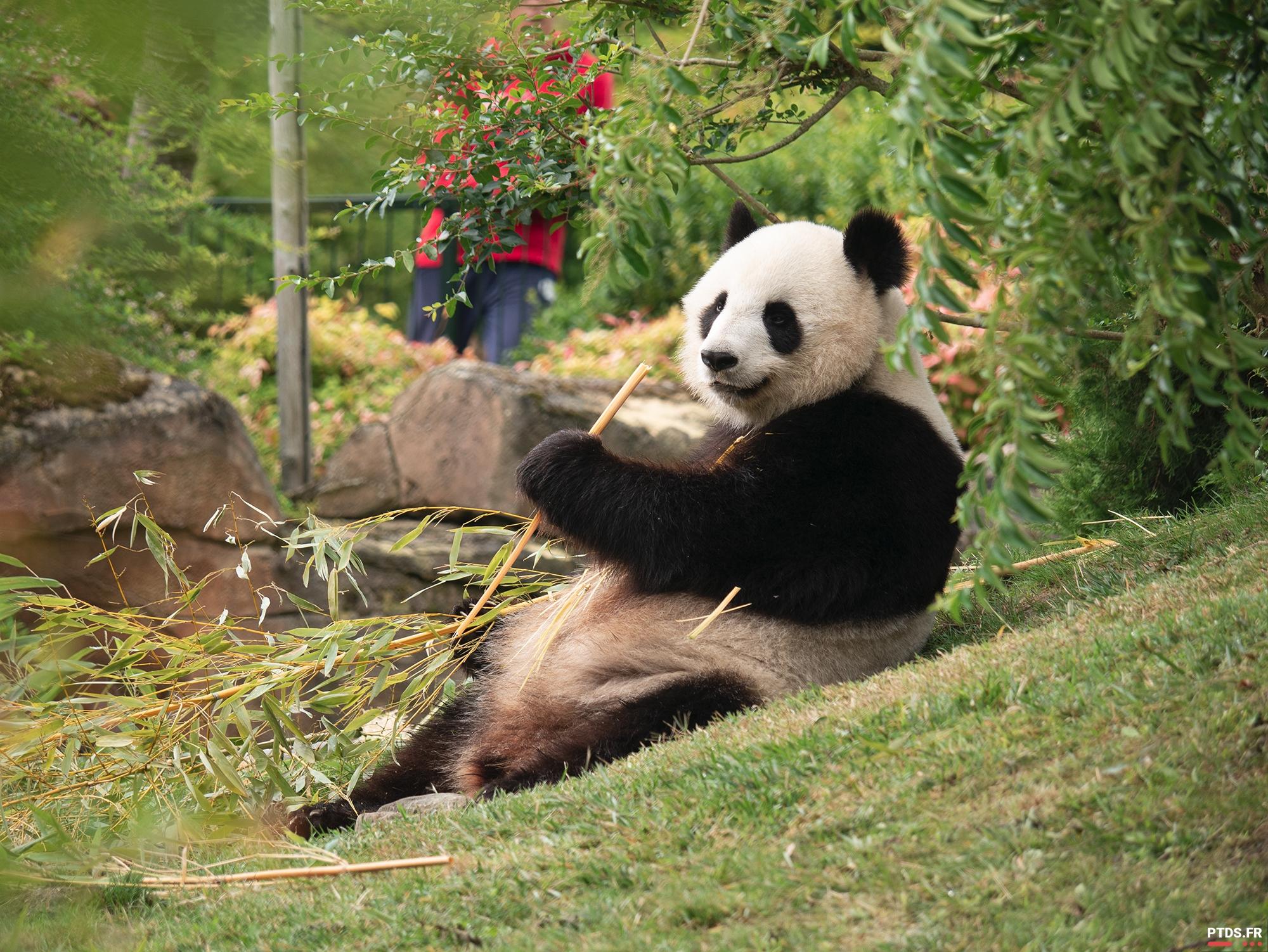 Louer un objectif photo pour aller au ZooParc de Beauval 7