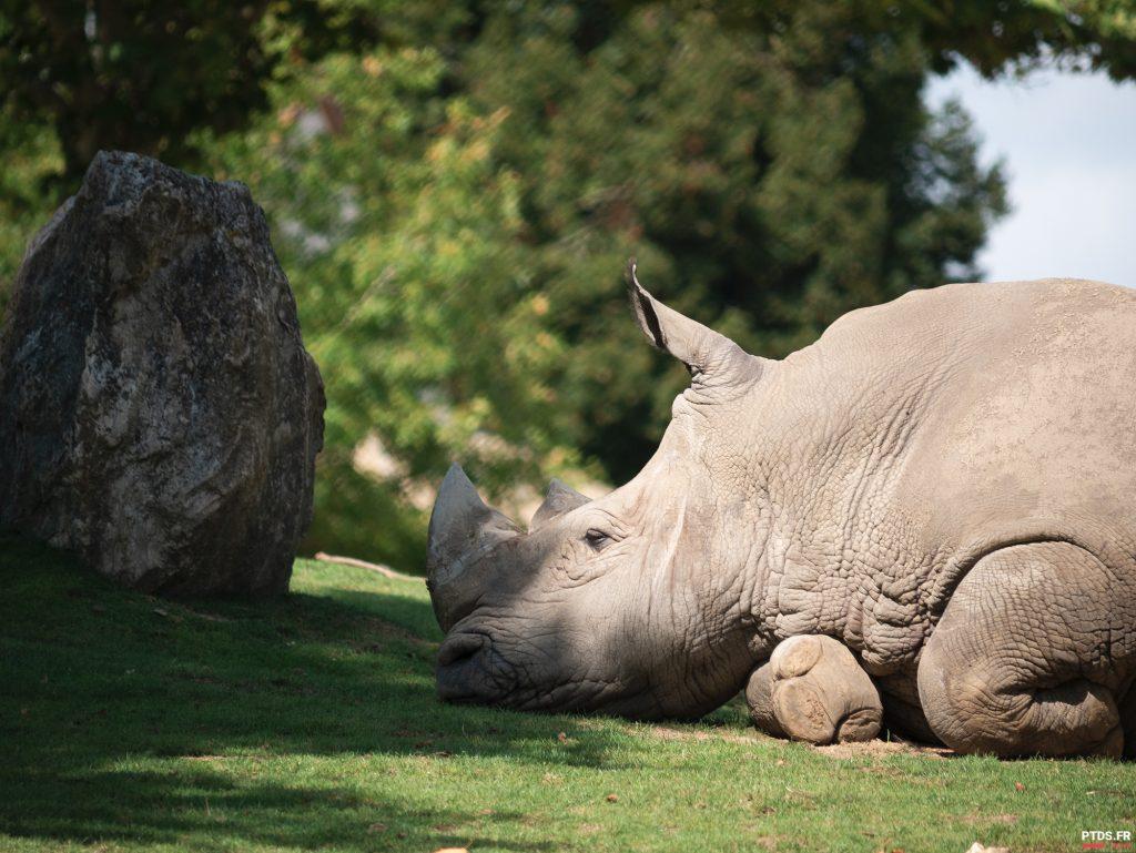 Louer un objectif photo pour aller au ZooParc de Beauval 11