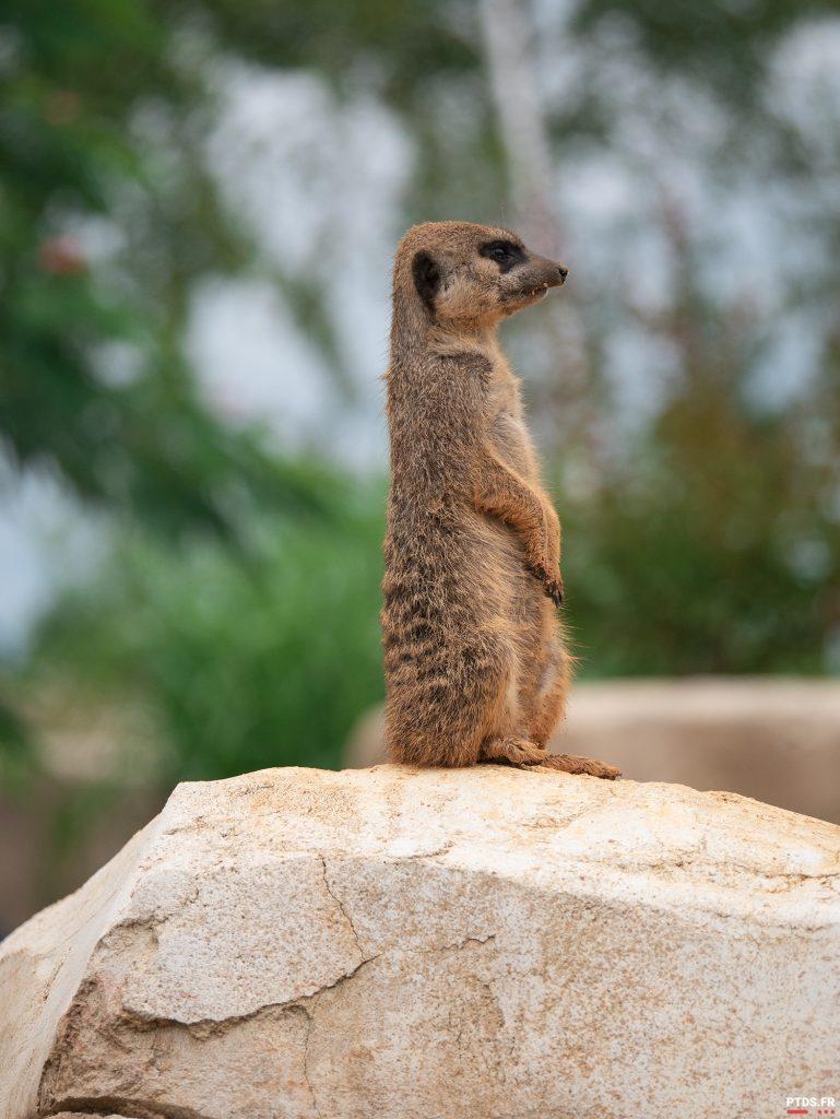 Louer un objectif photo pour aller au ZooParc de Beauval 2